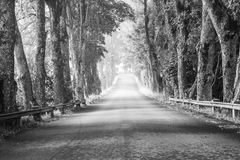 The open road. The beautiful road in black white Stock Image