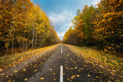 Open Road Path Walkway Through Autumn Forest In Sunny Day Stock Photography