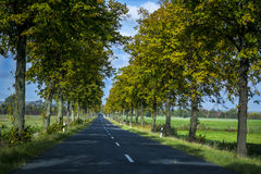 Open Road with the trees Royalty Free Stock Photography