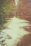 Open road view in the forest. vintage process, ready for typography Royalty Free Stock Photography