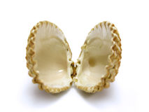 Open scallop shell Royalty Free Stock Image