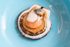 Open scallop shell. On a blue plate Royalty Free Stock Image