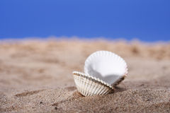 Open sea shell on beach sand and blue sky Royalty Free Stock Photos
