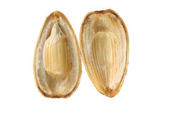 Open seed Stock Photography