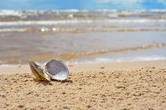 Open shell Royalty Free Stock Photography