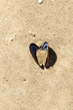 Open shell at the beach Royalty Free Stock Photos