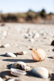 Open shell on beach Stock Images