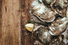 Open shell oyster with lemon and salt on a wooden board.  Royalty Free Stock Images