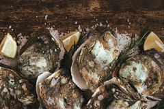 Open shell oyster with lemon and salt on a wooden board.  Stock Images