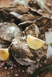Open shell oyster with lemon and salt on a wooden board.  Royalty Free Stock Photo