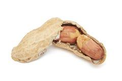 Open shelled peanuts (Arachis hypogaea) Royalty Free Stock Photo