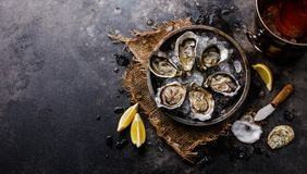 Open shucked fresh Oysters with lemon and Rose Wine. In ice bucket on dark background copy space royalty free stock photography