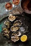 Open shucked fresh Oysters with lemon and Rose Wine. In ice bucket on dark background stock image
