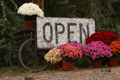 Open Sign with Colorful Flowers. Scenic Open Sign with colorful mums flowers colors of orange, purple, red, white and pink Stock Image