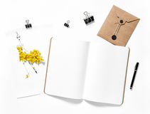 Open sketchbook mimosa flowers white background Royalty Free Stock Image