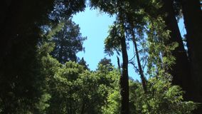 Open sky through forest trees. Video of open sky through forest trees stock video footage