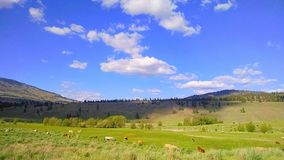 Open space. A country field in Eastern Washington royalty free stock photos