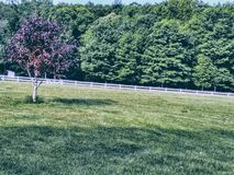 Open spring time field on farm royalty free stock photos