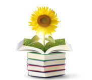 Open sun flowers growing book Stock Photos