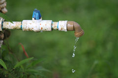 An open tap let see the water fall over the lawn Royalty Free Stock Photo