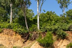 Open trees roots due to landslides, soil erosion, after road cut stock photos