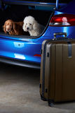 Open trunk of car. Ready for packing luggage bags and dogs. Travelling poodle and spaniel dogs Royalty Free Stock Photography