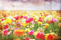 Open view of flowers field with textured vintage effect. Stock Photo
