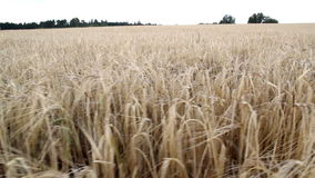 An open view of the large hay field Royalty Free Stock Photos