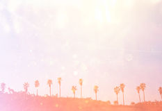 Open view of palm trees. retro filtered image Stock Photo