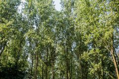 Open view of the sky through green trees. sun light day time. town park sky view. Nature Stock Photos