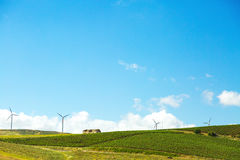 Open Vineyard Fields With Wind Turbines. Green field of grape vineyards in Sicily Italy with wind turbines. Copy space in the wide open blue sky stock image