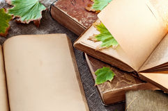Open vintage book with blank pages and  leaves close up Stock Photos