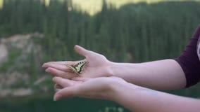 Open vrouwelijke handen die een gele vlinder houden stock videobeelden