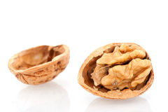 Open walnut Stock Image