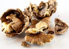 Open walnut Stock Photo