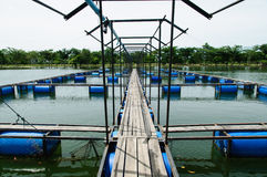 Open water fish farm Stock Images