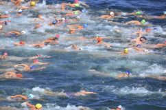 Open Water Swim Stock Photography