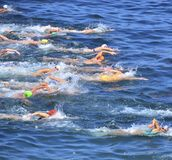 Open Water Swim Royalty Free Stock Image