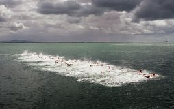 Open water swimming competitors start a long distance race stock photo