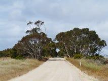 Open weg met bomen Royalty-vrije Stock Foto's