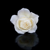 Open white rose button with reflection Royalty Free Stock Photography
