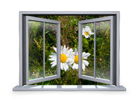 Open white window with a view to the flower. Open white window a view to the flower Stock Image