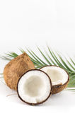 Open and whole coconuts and palm leaves. On white Stock Photography