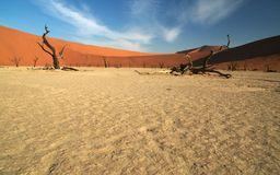 Open wide at deadvlei. The famous dead trees of deadvlei in namibia Stock Photography