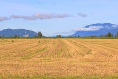 Open wijd Geoogste Hay Field en Bergen stock afbeelding