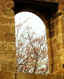 Open window. Tree branches as seen through an open window. Nicosia, Cyprus Stock Photo
