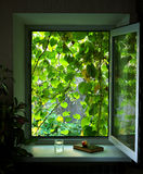 Open window with climbing plants Stock Photo