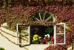Open window with colored geraniums Royalty Free Stock Image