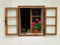 Open window with a flower pot. Of geraniums and old metal iron in the wall of a medieval castle Zvikov (Czech repoublika royalty free stock photos