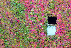 Open Window in Ivy Wall Royalty Free Stock Images